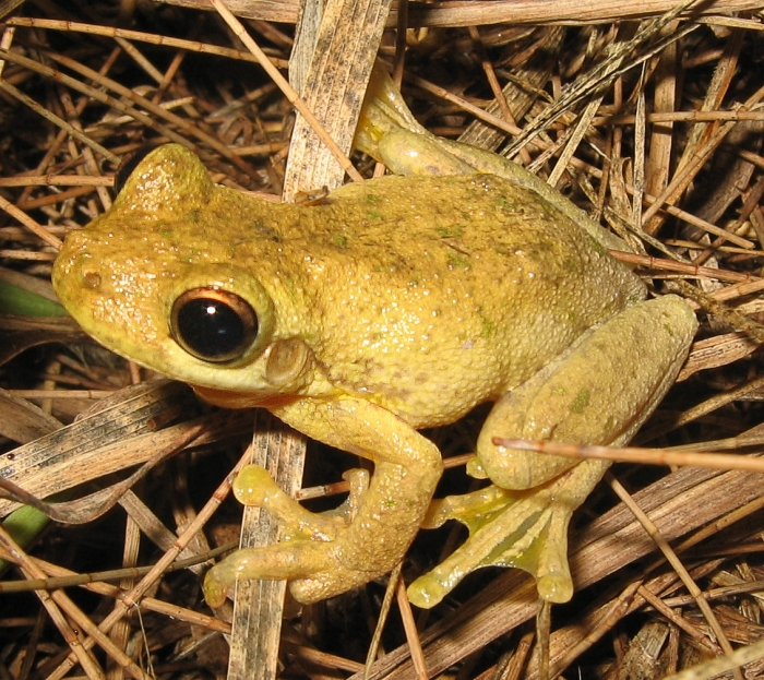 Frog-eating